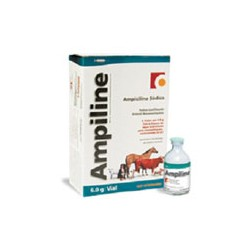 AMPILINE LARGE 6,0 GRS/6 VIALES